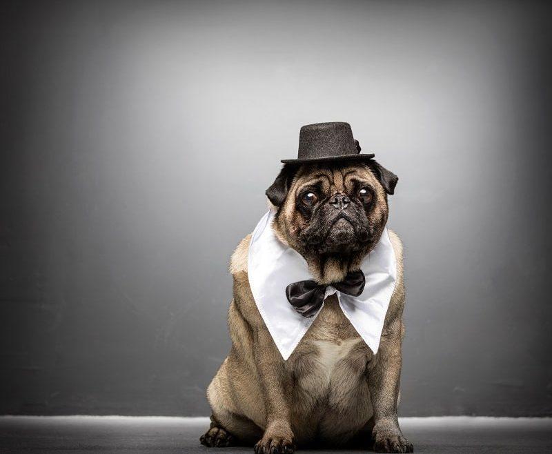 Pug decal-min