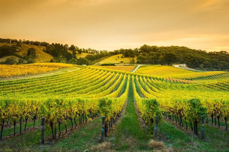 inherited a vineyard-min